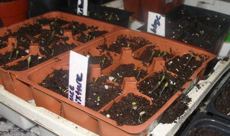 Seedlings Started