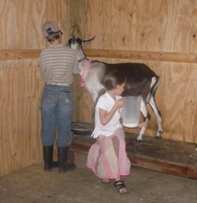 The Goat's Milk Myth