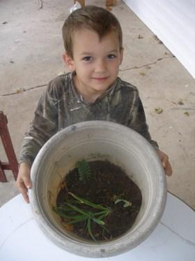 My $3.00 Free Wild Plants
