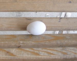 Who Noticed the New Chicken Egg