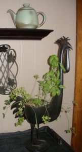 Town Home Gardening