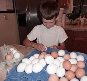 Egg Chores