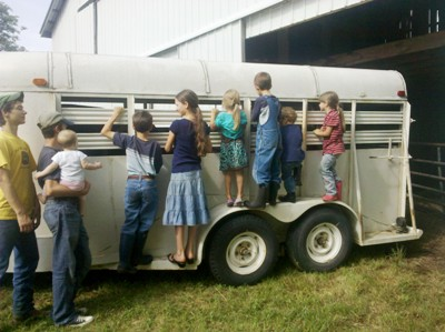 Bringing Home A Dairy Cow
