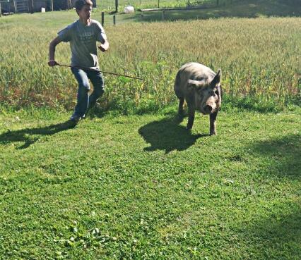 Raising a Hog
